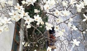 신앙촌에 봄이 오는 순간 [사진부문]